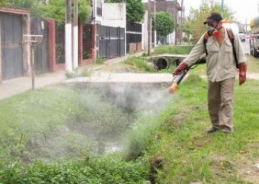 Dos nuevos casos probables de dengue se registraron en la capital
