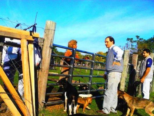 Cierran el perímetro del terreno de la vecina que alberga decenas de perros en Mercedes
