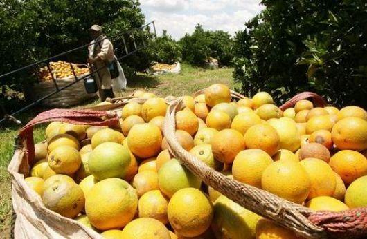 Hacia la Capital del Limón, con el 65% de plantaciones