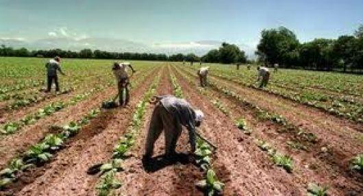 Nueva herramienta para registrar a los trabajadores agrarios