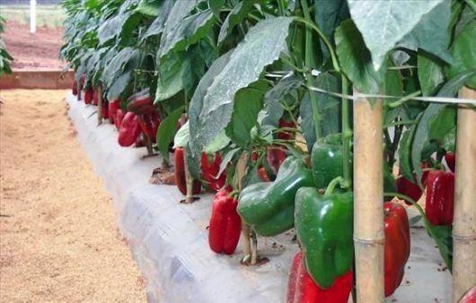 Encuentro Regional de Agroecología en la Escuela Agrotecnica