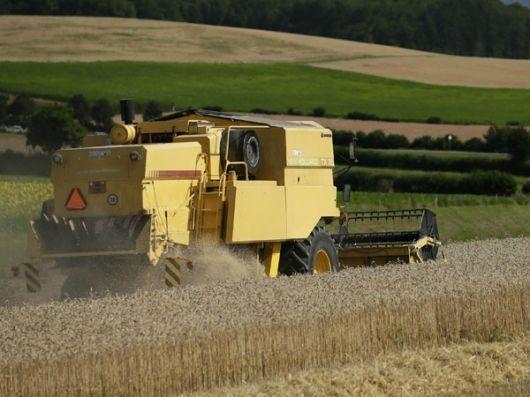 El Gobierno Nacional aplicó la Ley de Abastecimiento al trigo