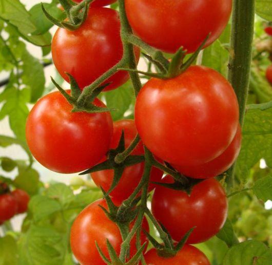 El Gobierno dio marcha atrás con la importación de tomates