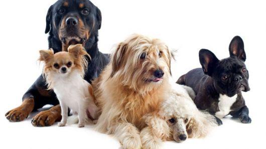 Se realizará la Exposición Anual del Club Canino