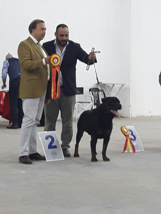 Primera exposición de perros de raza